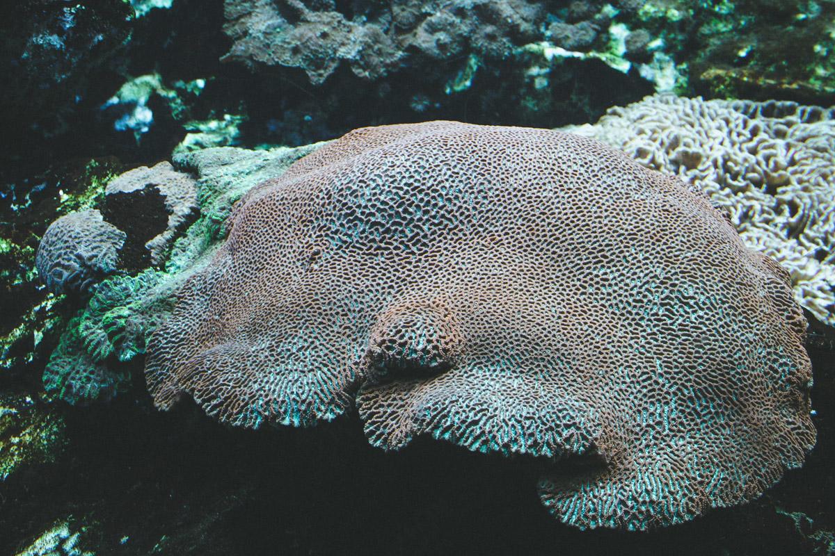 aquarium-st-malo-anemone