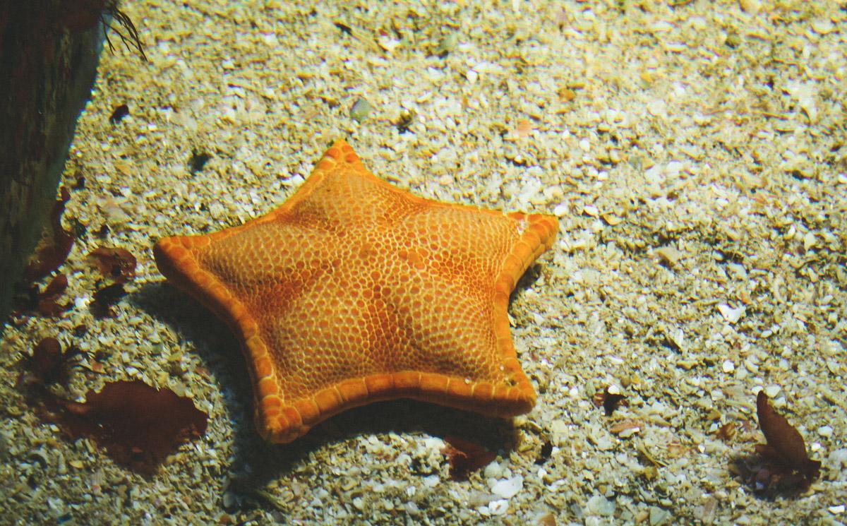 aquarium-st-malo-etoile-mer