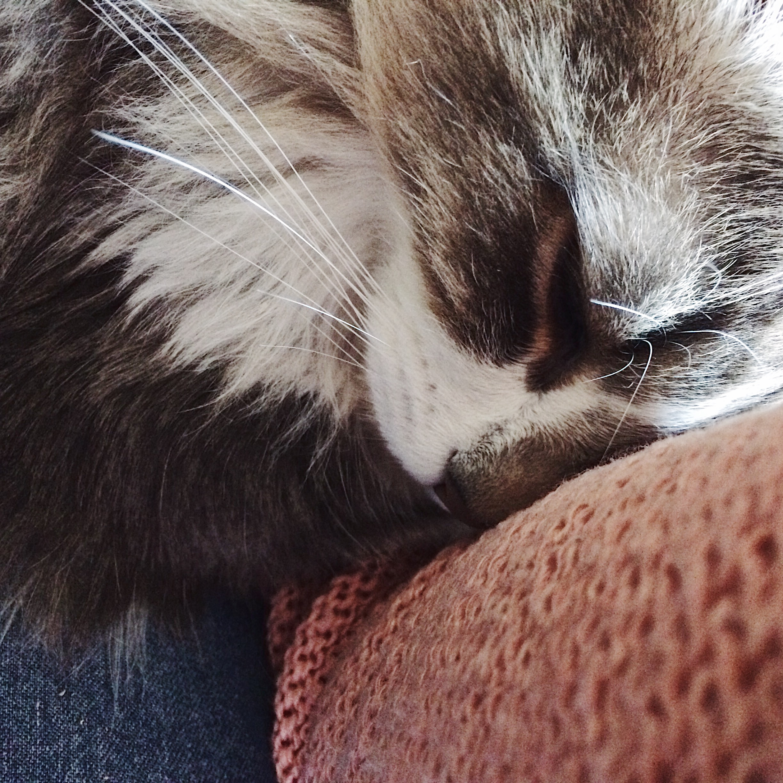 chat-calin-bonheur-avril