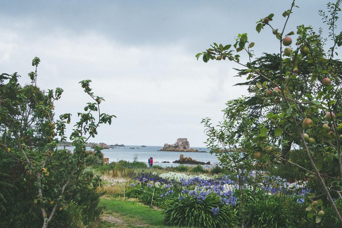 île-de-brehat-pepiniere-vue-mer