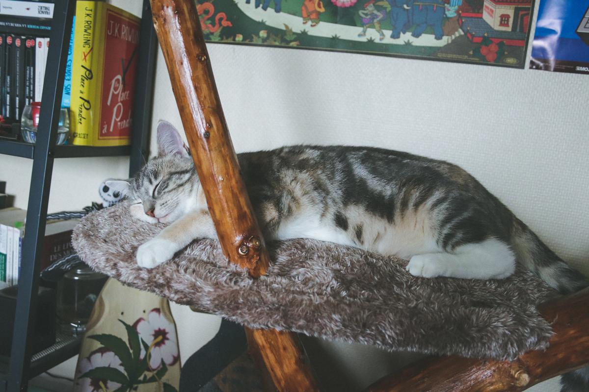 deux-chats-jyn