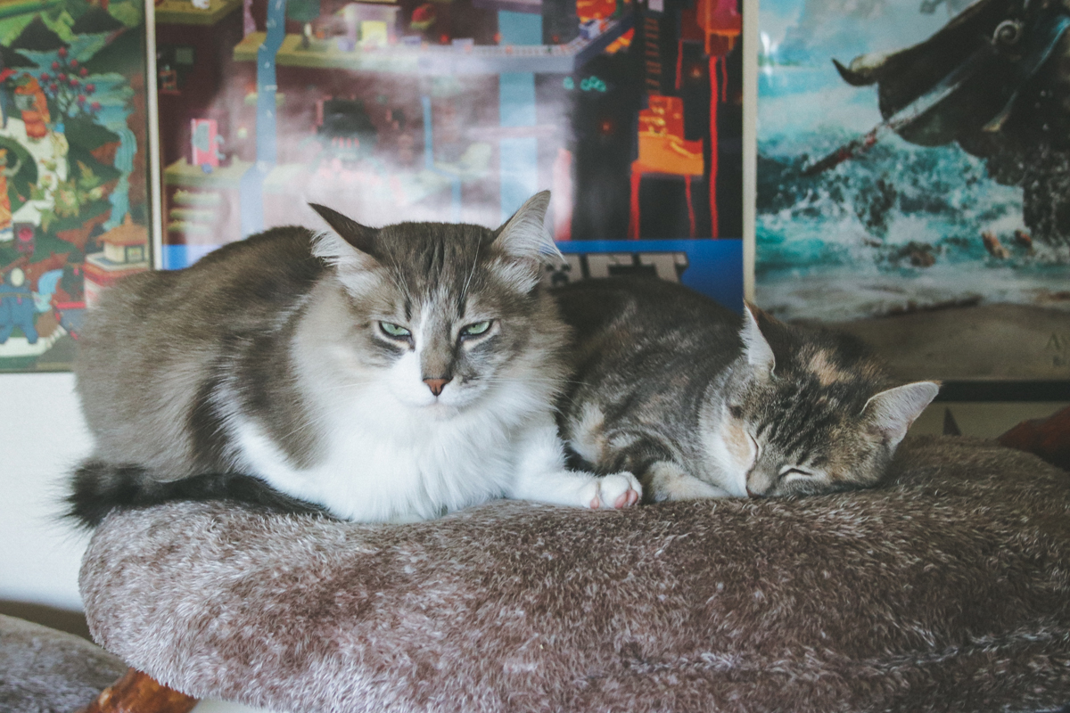 deux-chats-many-jyn