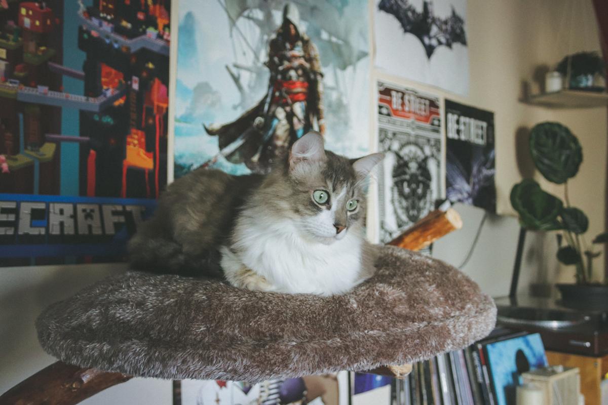deux-chats-many
