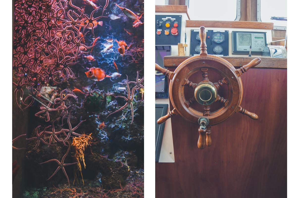 le-croisic-etoile-mer-barre