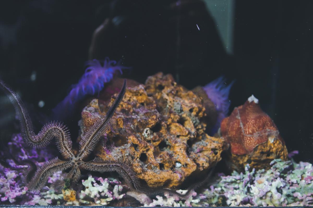 le-croisic-etoile-mer