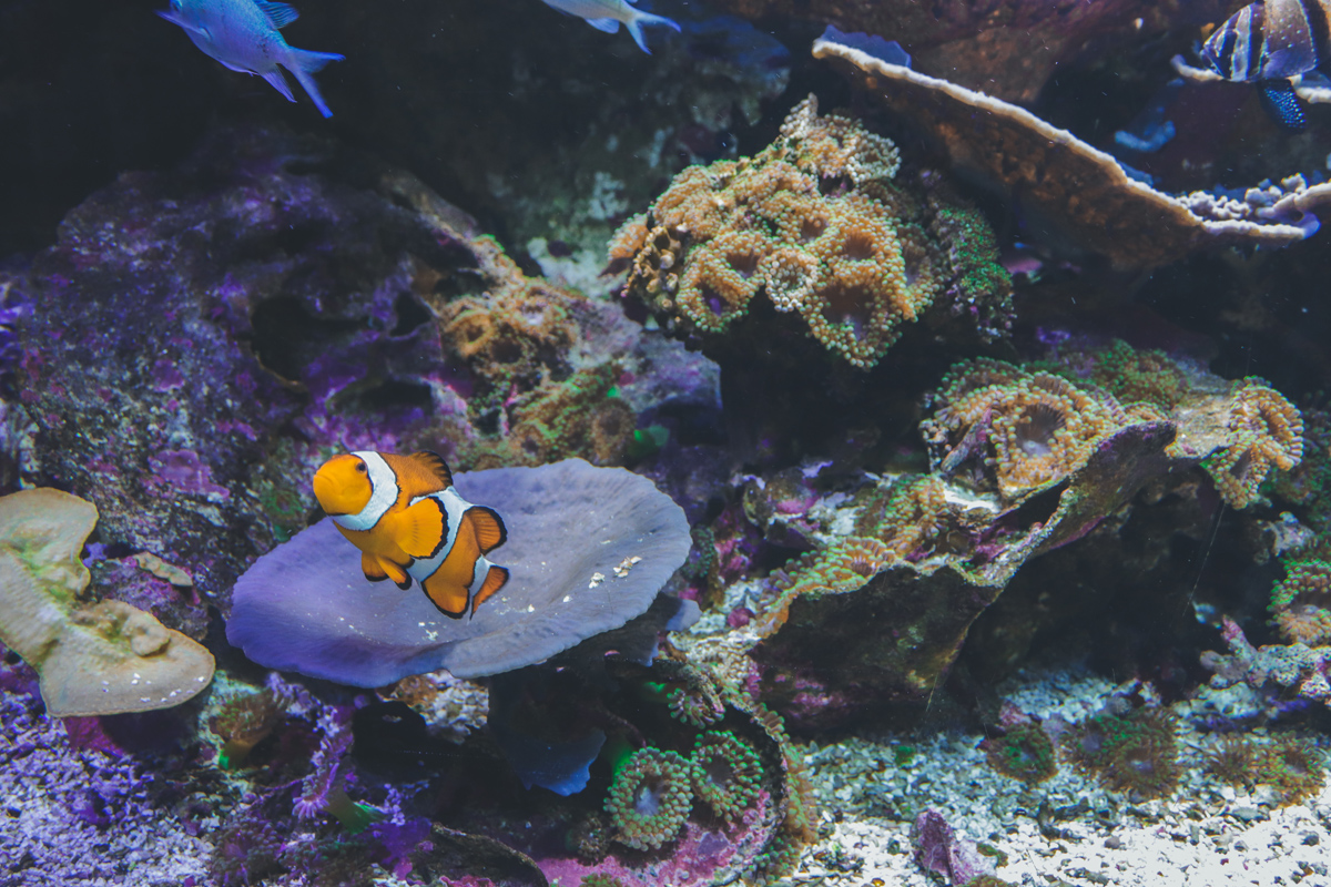 le-croisic-ocearium-poisson-clown
