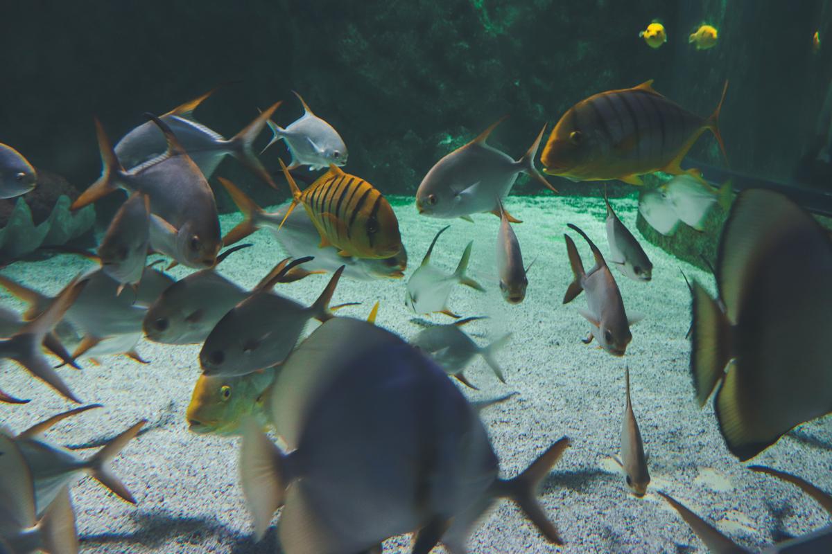 le-croisic-ocearium