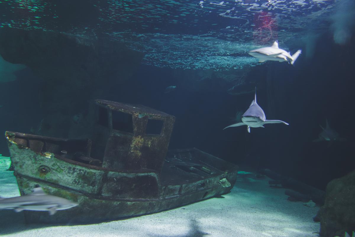 le-croisic-ocearium-requin