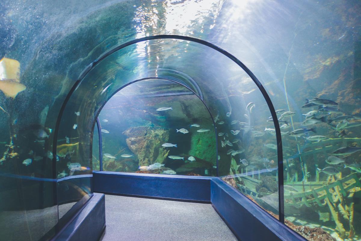 le-croisic-ocearium-tunnel